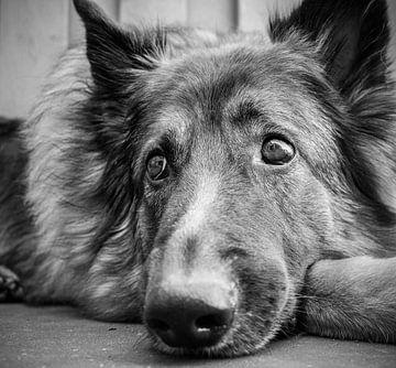 Doggy van Vivian van den Ende
