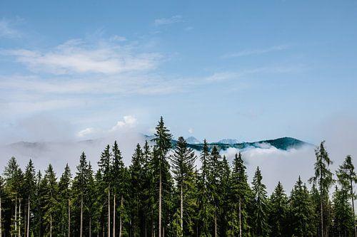 Als de bergen uit het bos opstijgen