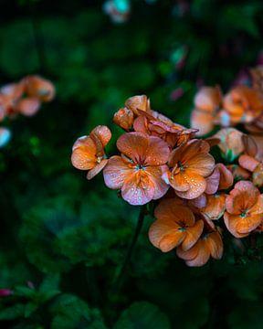 kleurrijke bloemen van Stuart De vries