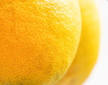Citrons sur FotoSynthese
