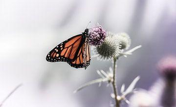 Monarch butterfly on thistle von Mark Zanderink
