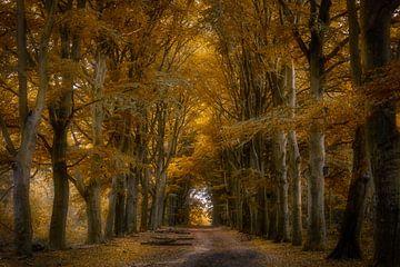 Autumn Lane von Bart Hendrix