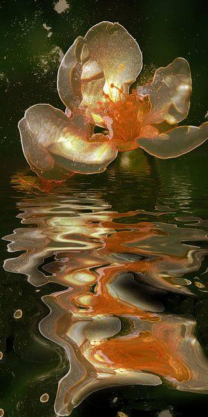 Frühlingsnacht - Apfelblüte in Goldwasser von Christine Nöhmeier