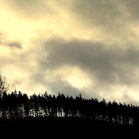 Loofbomen op een berg (boomgrens) van UN fotografie