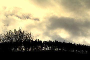Laubbäume auf einem Berg (Baumgrenze) von UN fotografie