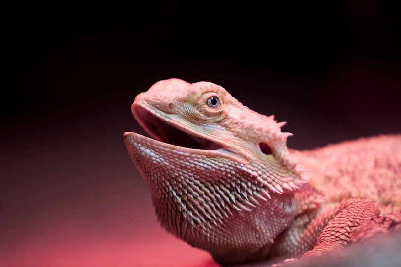 Reptiel von Guido Akster