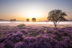 Prachtige zonsopkomst op de Gooische heide!
