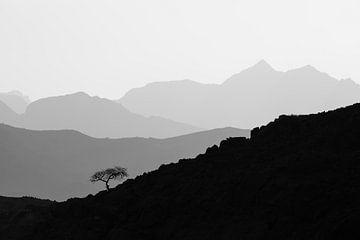 Einsamer Baum in der Berglandschaft von Krijn van der Giessen