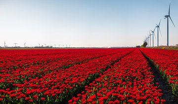 Tulpenlandschaft in Flevoland von Emile Kaihatu