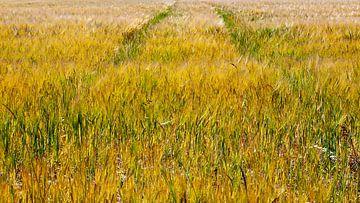 Sommer Getreidefeld mit Karrenbahn von Evert Jan Luchies