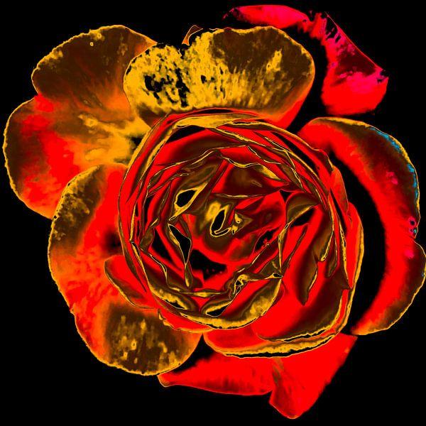 Gouden roos van arjan doornbos