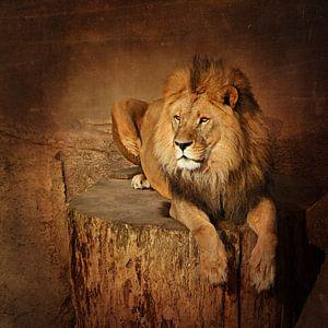 Ruhender Löwe van