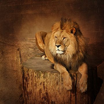 Ruhender Löwe von Heike Hultsch