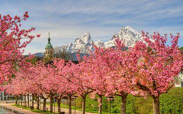 Cerisiers en fleurs de Berchtesgaden et montagne Watzmann