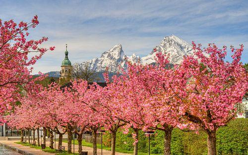 Berchtesgaden Kirschblüte und Watzmann