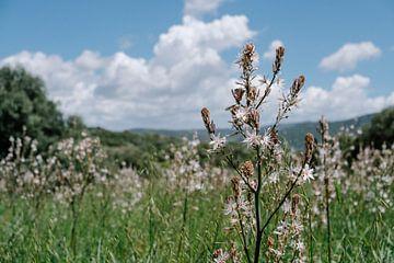 Natuur op Sardinië van Tom Rijpert