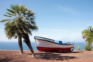 boat and palm teee in tropical climate