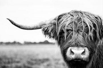 Porträt eines schottischen Hochlandkuhstieres in Schwarzweiß von KB Design & Photography (Karen Brouwer)