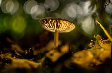 Pilz im Reest-Tal von Judith de Hollander