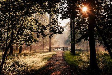 Sonnenaufgang beleuchteter Durchgang im Leeuwarder Bos von Nando Foto