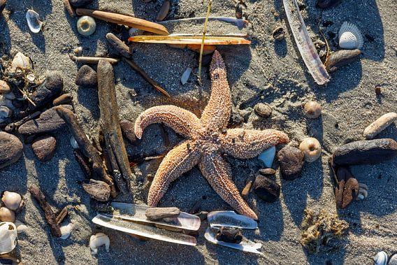 aangespoelde zeester op het strand na een storm van Rick Keus