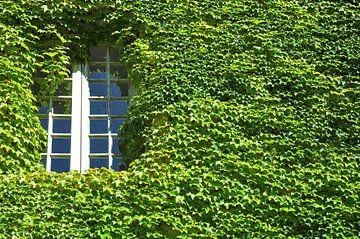 het raam naar de binnenplaats van Peter Eckert