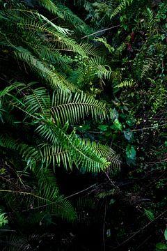 Groen bladerdek in de jungle van Bali, Indonesië, Azië | Natuure & Reis fotografie van Sun Dances