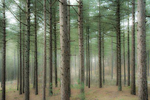 A Thousand trees van
