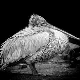 Pelikaan in zwart/wit. van Tilly Meijer