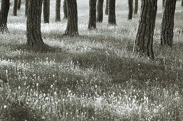 Bos bij de golf van Baratti, Toscane. von Rens Kromhout