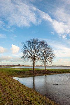 Twee kale bomen in een ondergelopen Nederlandse polder van