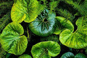 De achtergrond van het patroon natuur groene bladeren abstractie van Dieter Walther