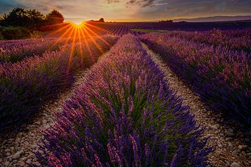Lavendelveld in de Provence tijdens zonsondergang