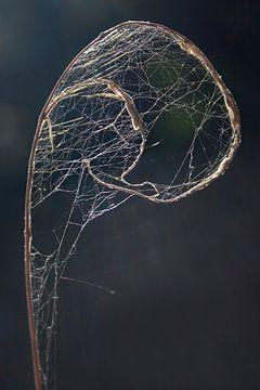 Abstrakte Natur--Zweig gefangen in Spinnennetz-01 von Katja Goede