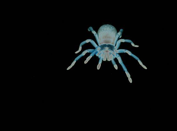 Spider fantasy van Roderick van de Berg