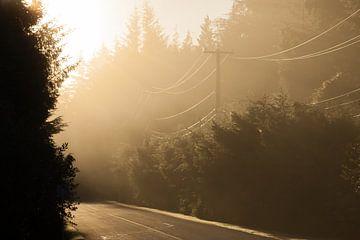 Zonsondergang bosweg