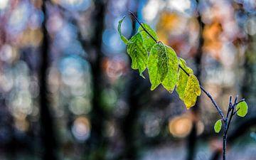 Herfstkleuren.08 (16x10) van Timo Bergenhenegouwen