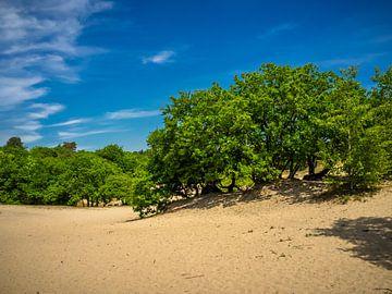 une plaine sablonneuse avec des arbres