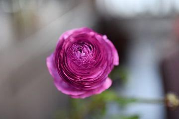 Colourful petals van Femke Sijtsma