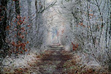 sprookjesachtig bospad von Silvia van Zutphen