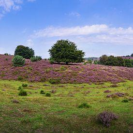 Posbank | Veluwezoom | Lande violette avec arbre | Cercle mural sur Ricardo Bouman