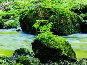 Rotsen met mos in Triebtal Vogtland van Animaflora PicsStock