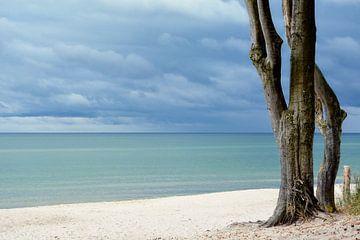 Ostsee von Claudia Moeckel