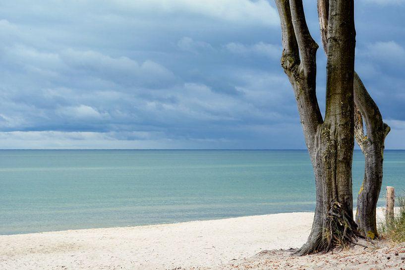 Ostzee van Claudia Moeckel