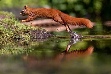 Springendes Eichhörnchen von Anjella Buckens