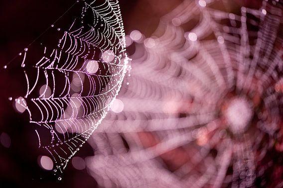 Webbing - spinnenweb op de hei van Andrea Gulickx