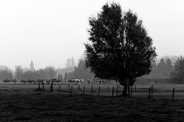 mist in de wei von Eline Willekens