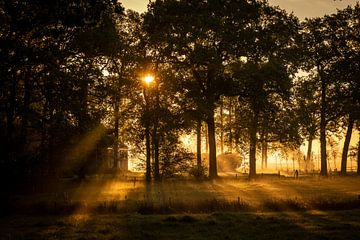 Sonnenaufgang von Joris Brouwer