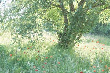 Un endroit romantique sur Birgitte Bergman