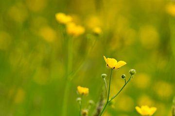 Gelbe und grüne Rasenflächen von J..M de Jong-Jansen
